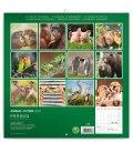 Wall calendar Animal Cuties 2020