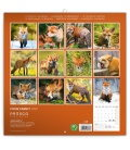 Wall calendar Foxie family 2020
