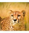 Wall calendar Wild Africa 2020