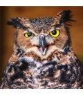 Wall calendar Owls 2020