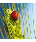 Wall calendar Ladybugs 2020