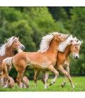 Wall calendar Horses 2020