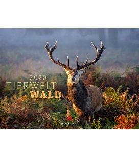 Wall calendar Tierwelt Wald 2020