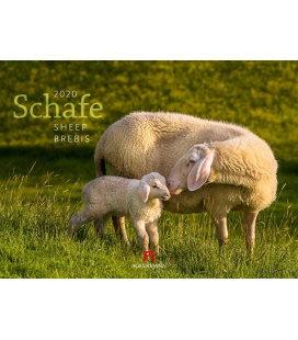 Wall calendar Schafe 2020