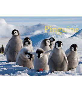Wall calendar Pinguine 2020