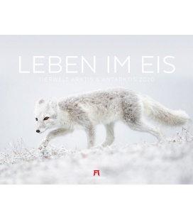 Wall calendar Leben im Eis - Tiere am Polarkreis 2020