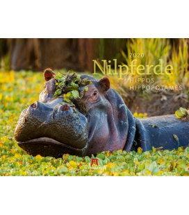 Wall calendar Nilpferde - Flusspferde 2020