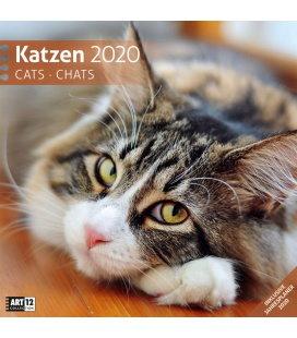 Wall calendar Katzen 2020