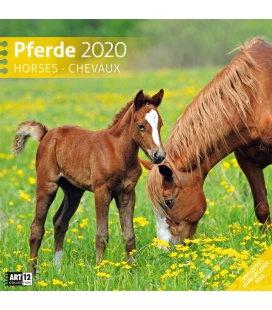 Wall calendar Pferde 2020