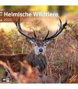 Wall calendar Heimische Wildtiere 2020