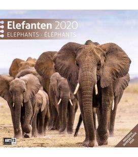 Wall calendar Elefanten 2020