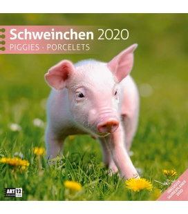 Wall calendar Schweinchen 2020