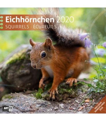 Wall calendar Eichhörnchen 2020