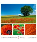 Wall calendar Colours of nature 2020