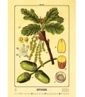 Wall calendar Herbarium 2021
