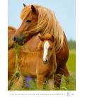 Wall calendar Horses Dreaming 2021