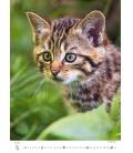Wall calendar Kittens/Katzenbabys/Koťátka/Mačičky 2021