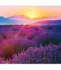 Wall calendar Provence - vázanka 2021