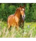 Wall calendar Horses 2021