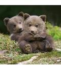 Wall calendar Baby Animals 2021