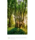 Wall calendar Bäume Kalender 2021