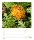 Wall calendar Südafrika - Wochenplaner Kalender 2021