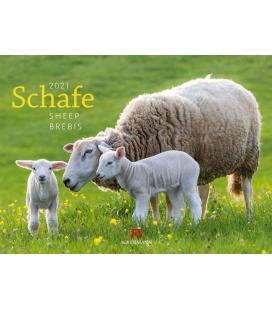 Wall calendar Schafe Kalender 2021