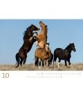 Wall calendar Wilde Pferde Kalender 2021