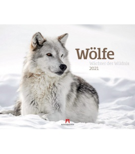 Wall calendar Wölfe - Wächter der Wildnis Kalender 2021