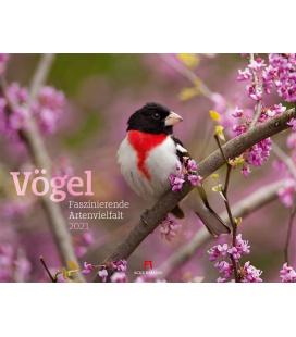 Wall calendar Vögel - Faszinierende Artenvielfalt Kalender 2021