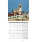 Wall calendar Wölfe Kalender 2021