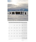 Wall calendar Pinguine Kalender 2021