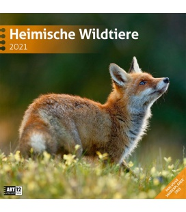 Wall calendar Heimische Wildtiere Kalender 2021