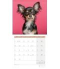 Wall calendar Dogs Kalender 2021