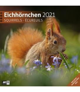 Wall calendar Eichhörnchen Kalender 2021