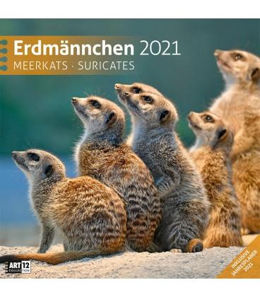 Wall calendar Erdmännchen Kalender 2021