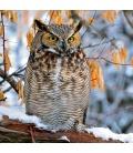 Wall calendar Owls 2021