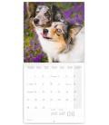 Wall calendar Dogs 2021
