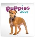 Wall calendar Puppies 2021