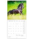 Wall calendar Horses – Christiane Slawik 2021