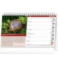 Table calendar Mushrooms 2021