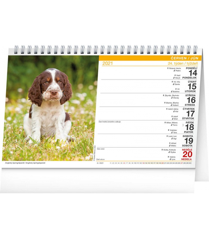 Table calendar Dogs 2021