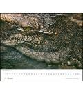 Wall calendar Porträts bedrohter Tiere (Tim Flach) 2021