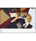 Wall calendar Sleeping Cats  (Bruno Morandi) 2021