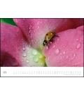 Wall calendar Marienkäfer - Ladybugs 2021