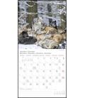 Wall calendar WölfeT&C 2021