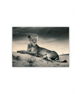 Wall calendar - Wooden picture - Lioness 2022