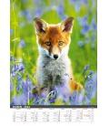 Wall calendar Myslivecký kalendář 2022
