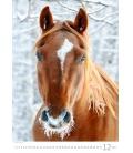 Wall calendar Horses Dreaming 2022