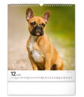 Wall calendar Dogs 2022